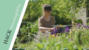OK-LU Website HACKMuseumsgARTen-Pflanzenfarbe